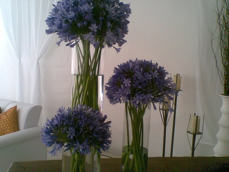 Placing agapanthus on the table to make the room more interest.