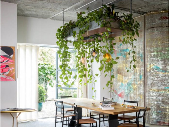 Use hanging plant on the ceiling right on the table.