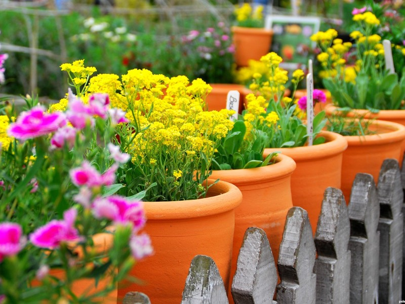 Choose plants according to lighting conditions.