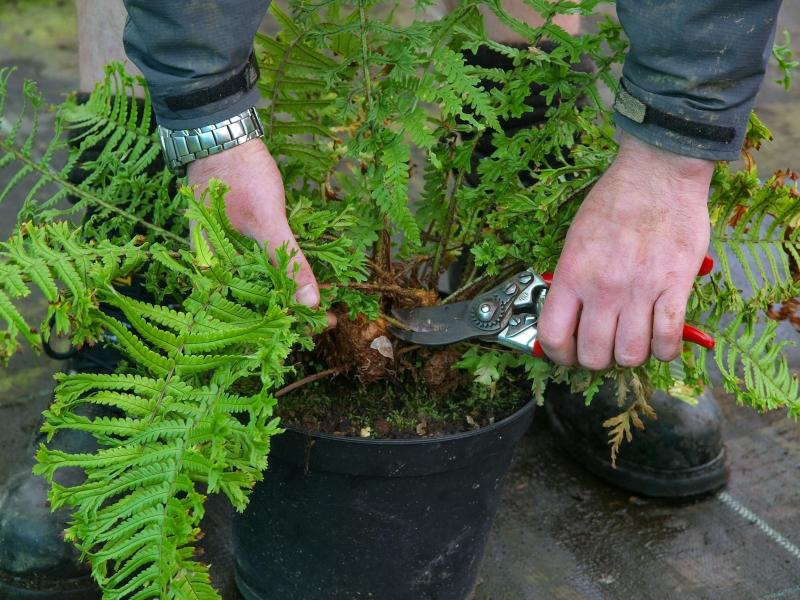 cut the plants neatly.