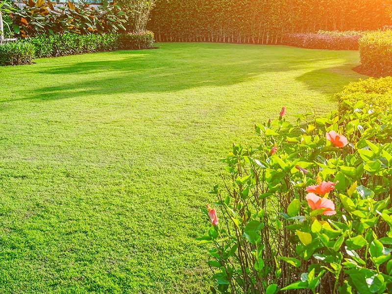keep the garden clean