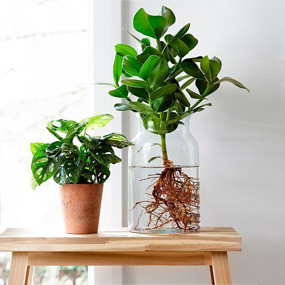 Smart DIY Container Water Plants Ideas Easily For Beginners At Home