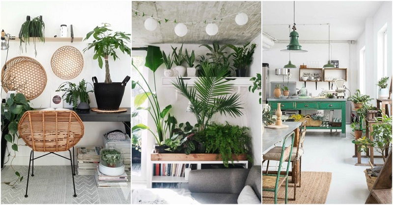 Find 15 Incredible Indoor Plants Decor Ideas Simdreamhomes
