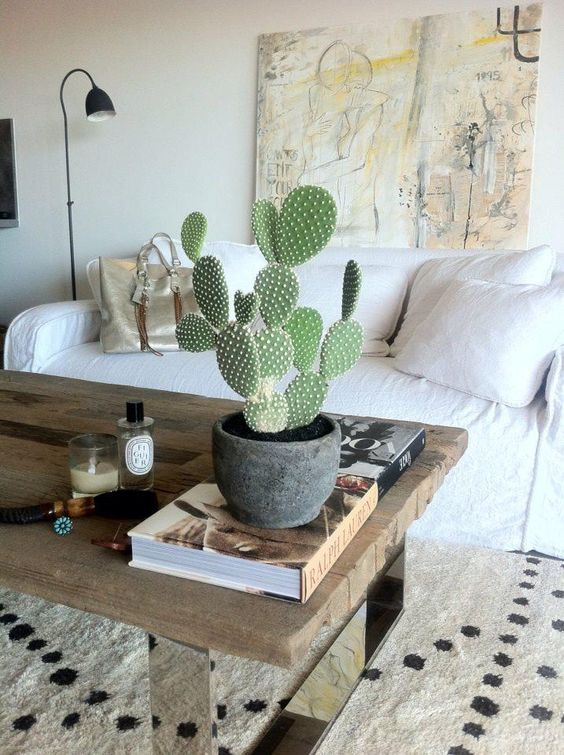 bunny ears cactus indoor plant