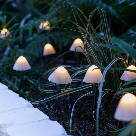 fairy light mushroom