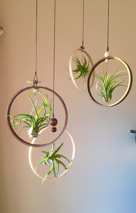 hanging plant potting