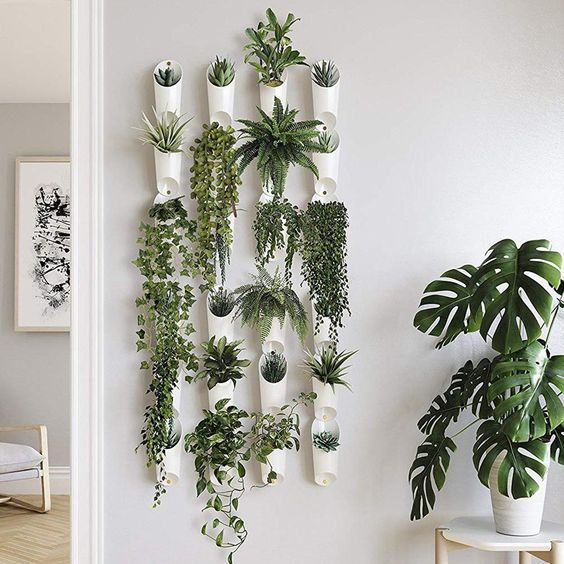 wall mounted plant