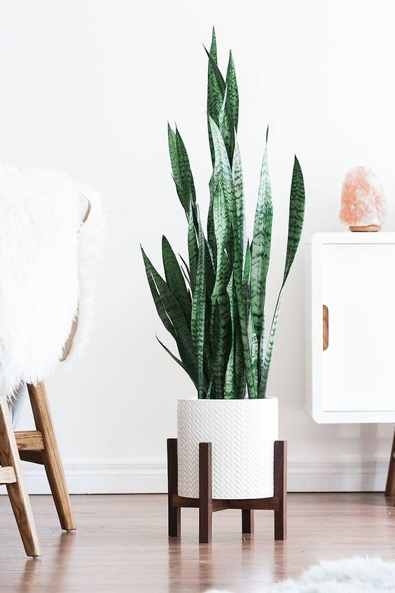 natural plant for dining room