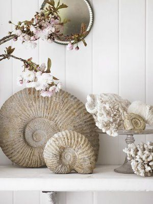 shells ornaments decor