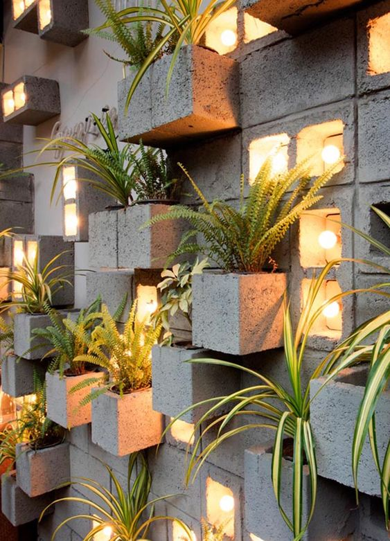 wall plant for small garden
