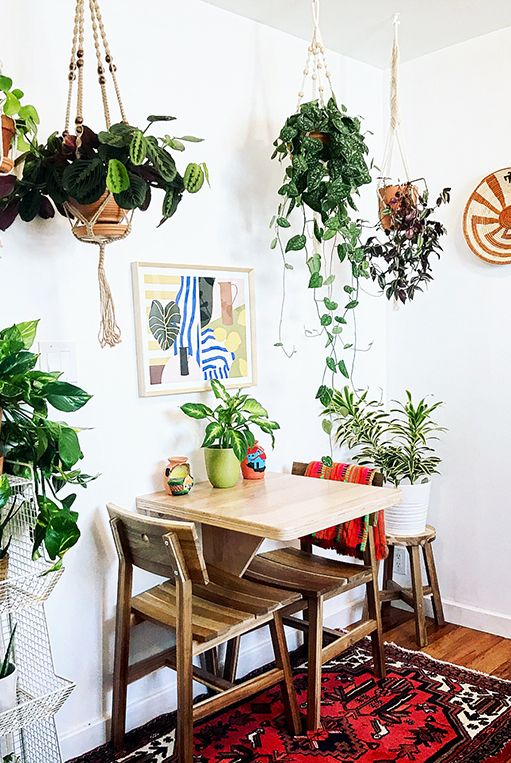hanging plant for small dining room