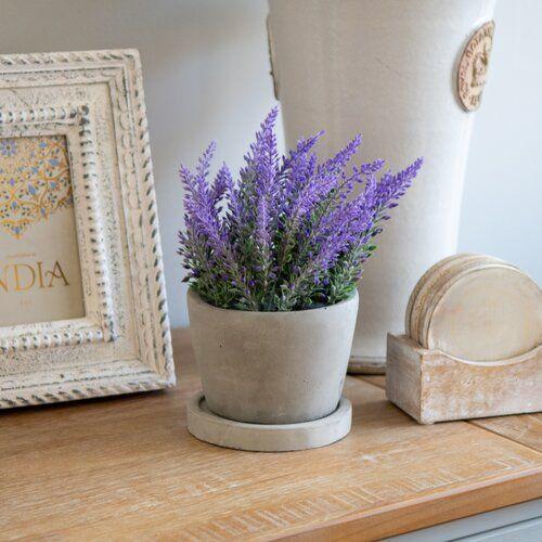 lavender plant for living room decoration
