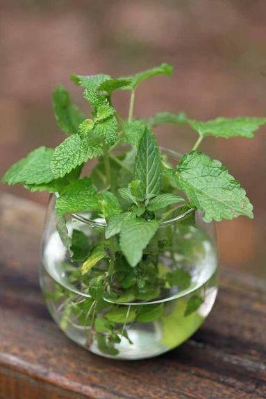mint plant decor